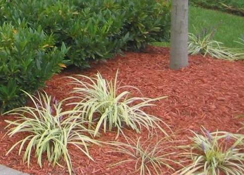 Xeriscape Landscape Design Desertscapes Lawn Care